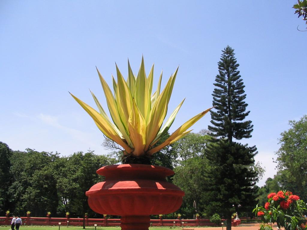 Bangalore 8-9-june2007 165